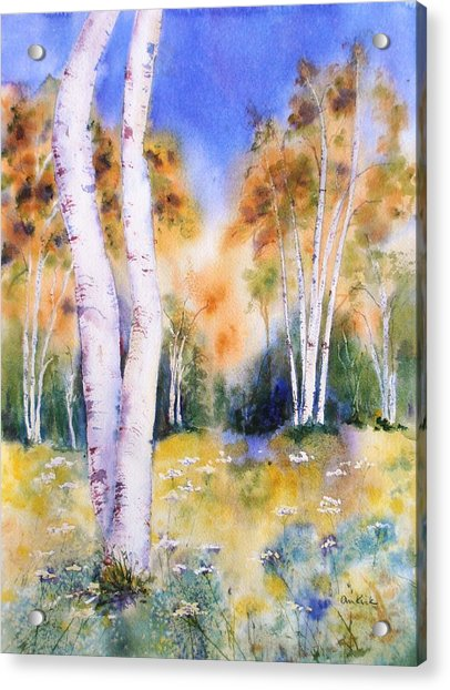 Late Summer Birches Acrylic Print