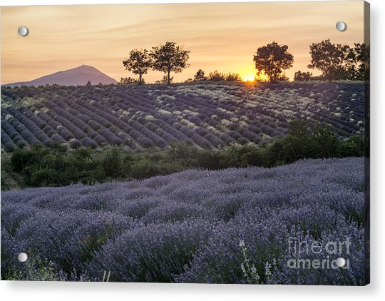 Acrylic Print featuring the photograph Lavender Field Provence  by Juergen Held