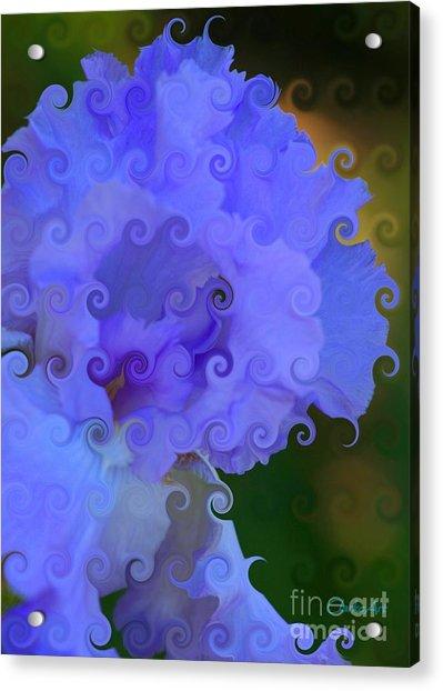 Lavender Curlicue Iris  Acrylic Print
