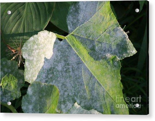 Calming Leafy Glade Acrylic Print
