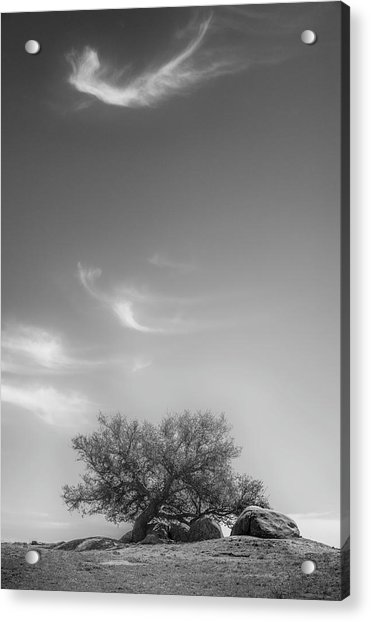 Leaning In Acrylic Print by Joseph Smith