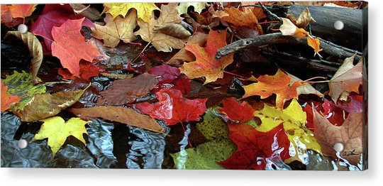 Leaves Of Color Acrylic Print