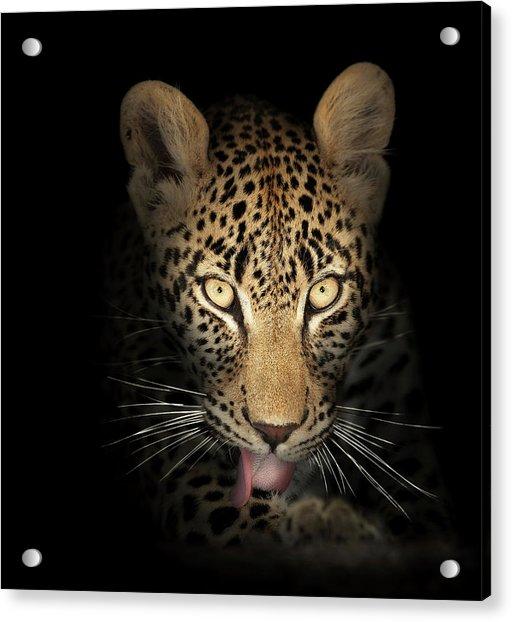 Leopard In The Dark Acrylic Print