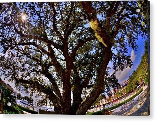 Liberty Oak Harbour Town Hilton Head Sc Acrylic Print