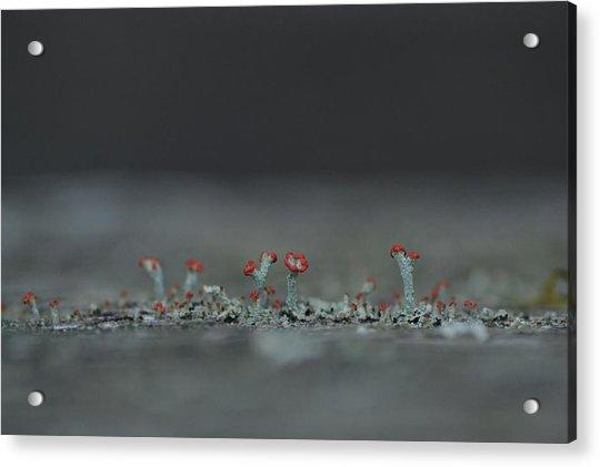 Lichen-scape Acrylic Print