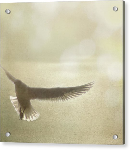 Acrylic Print featuring the photograph Lightness Of Being by Sally Banfill