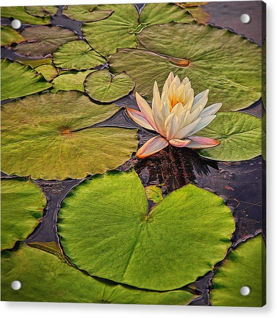 Lily In The Pads Acrylic Print