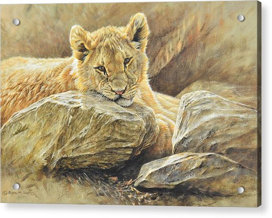 Acrylic Print featuring the painting Lion Cub Study by Alan M Hunt