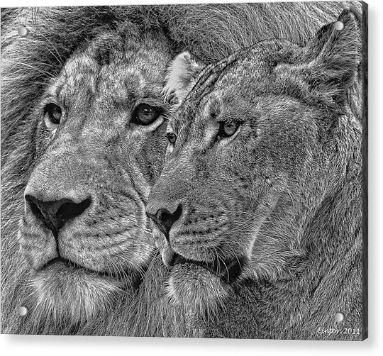 Lion King And Queen Acrylic Print