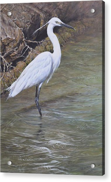 Acrylic Print featuring the painting Little Egret by Alan M Hunt