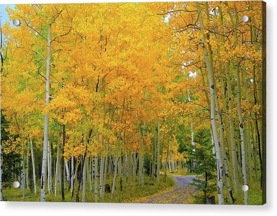 Lockett Meadow A Moment In Time Acrylic Print