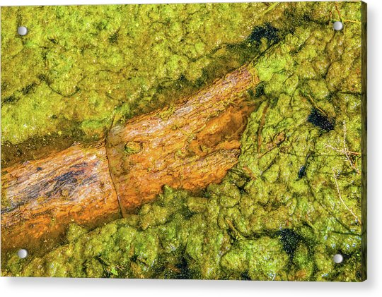 Log In Algae Acrylic Print