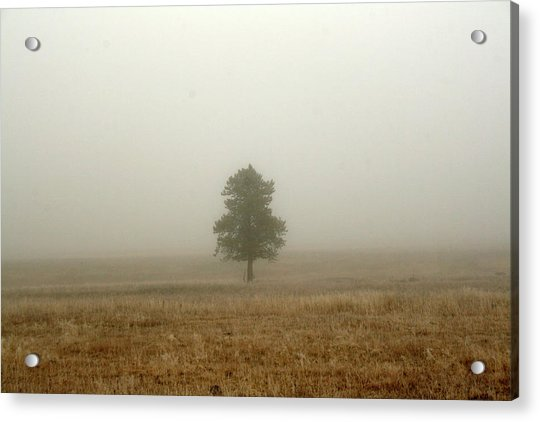 Lone Tree In Fog Acrylic Print