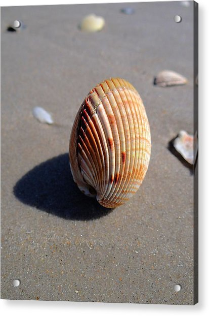 Look What The Tide Left Acrylic Print