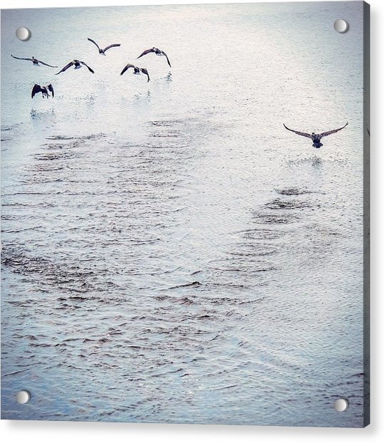 Looner Liftoff Acrylic Print