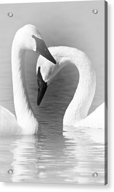 Love In Black And White Acrylic Print