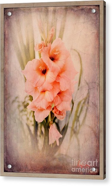 Lovely Gladiolus Acrylic Print