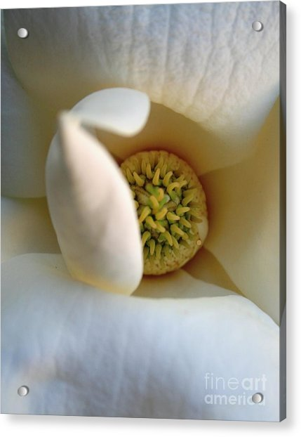Macro Magnolia Acrylic Print