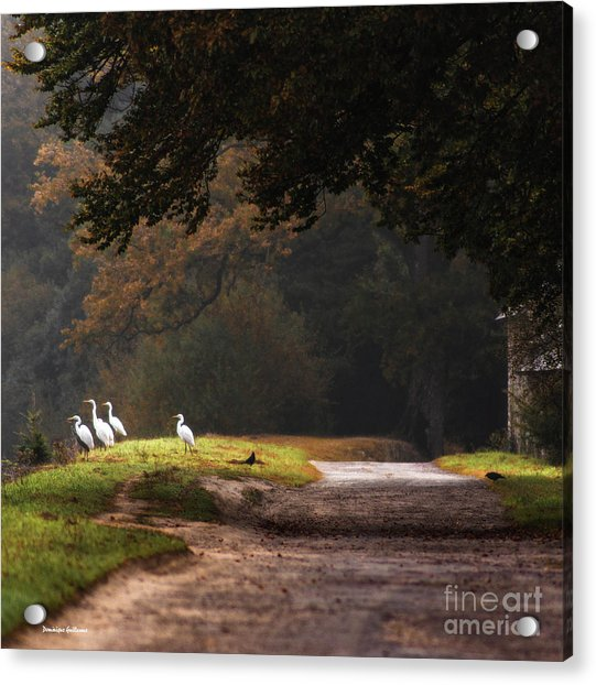 Magic Morning Acrylic Print