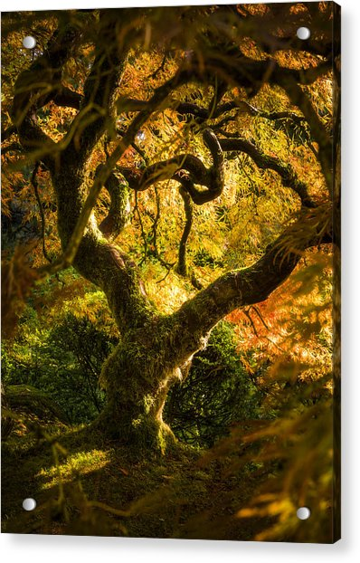 Maple Fairytale Acrylic Print