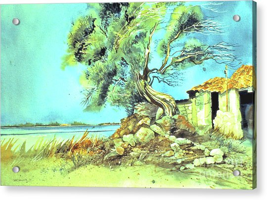 Mayorcan Tree Acrylic Print