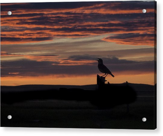 Meadow Lark's Salute To The Sunset Acrylic Print