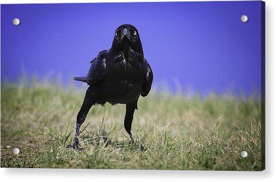 Menacing Crow Acrylic Print