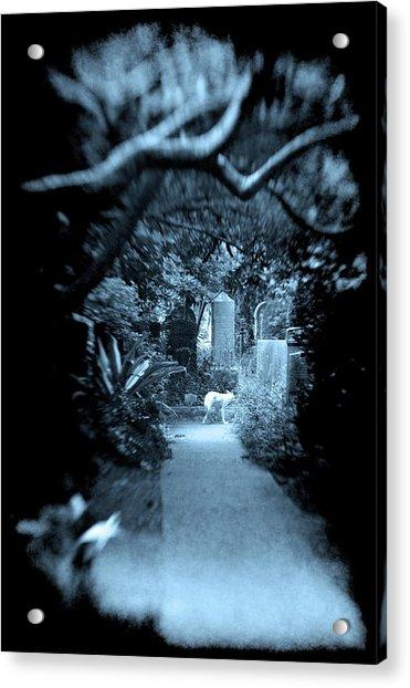 Midnight In The Garden O Acrylic Print