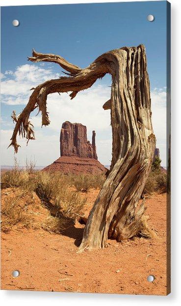 Monument Valley Desert Tree Acrylic Print