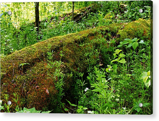 Moss Covered Log 2 Acrylic Print