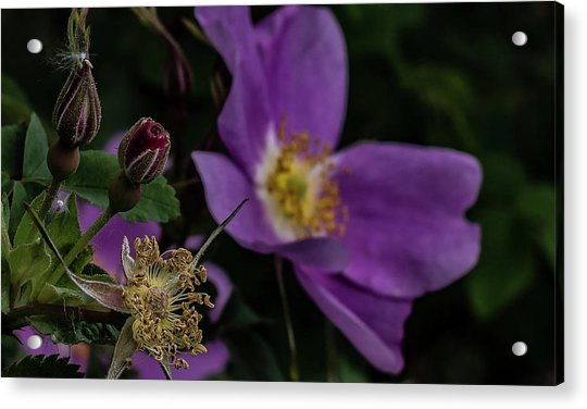Mothers Day Acrylic Print