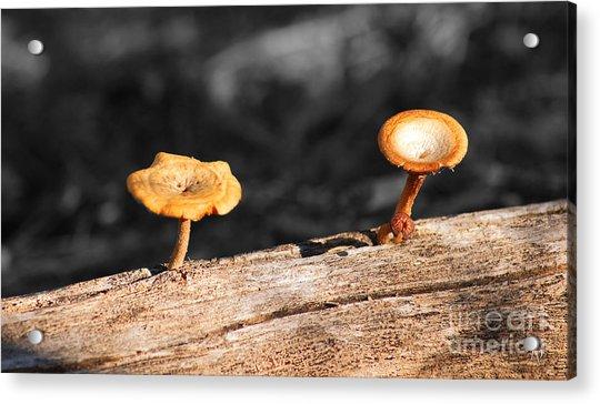 Mushrooms On A Branch Acrylic Print
