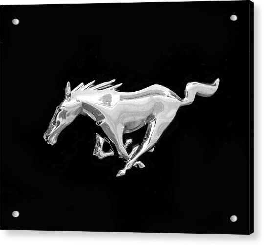 Acrylic Print featuring the photograph Mustang by Rona Black