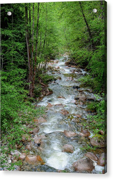 Naturally Pure Stream Backroad Discovery Acrylic Print