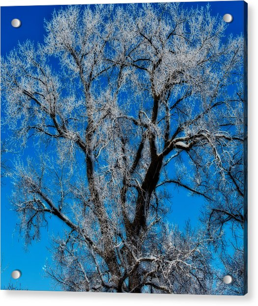Natures Lace Acrylic Print