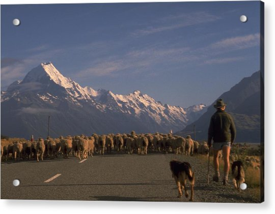 Photograph - New Zealand Mt Cook by Travel Pics