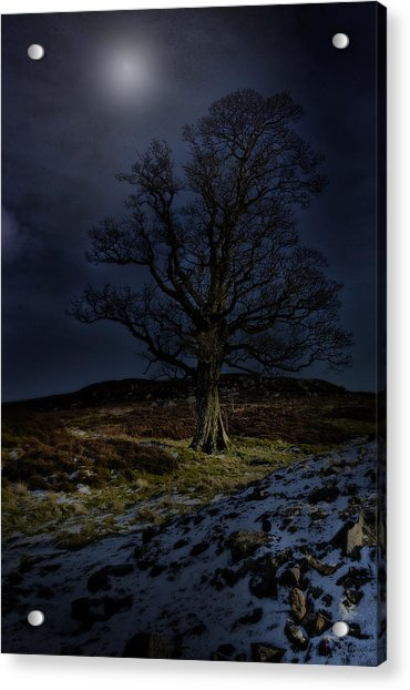 Nidderdale Tree Acrylic Print