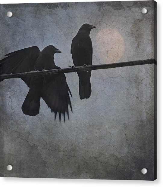 Acrylic Print featuring the photograph Night Watch  by Sally Banfill