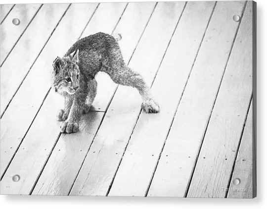 Acrylic Print featuring the photograph Ninja Lynx Kitty Bw by Tim Newton