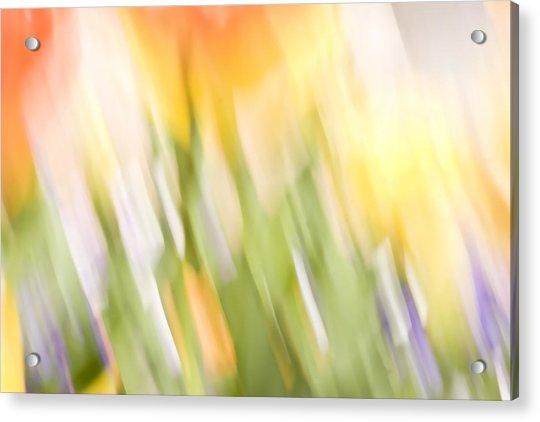 North Hills Tulips IIi Acrylic Print
