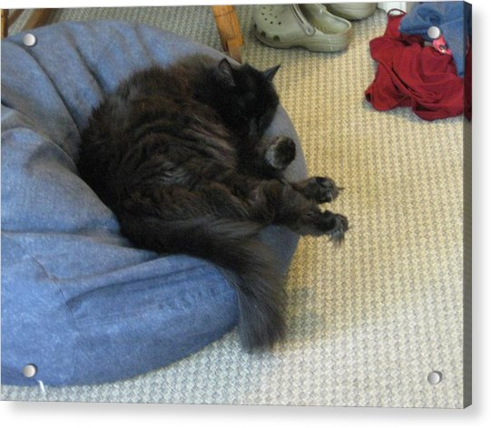 Not Interested In Helping With The Laundry Acrylic Print
