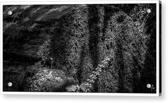 Nuances-horto-parque Estadual-campos Do Jordao-sp Acrylic Print