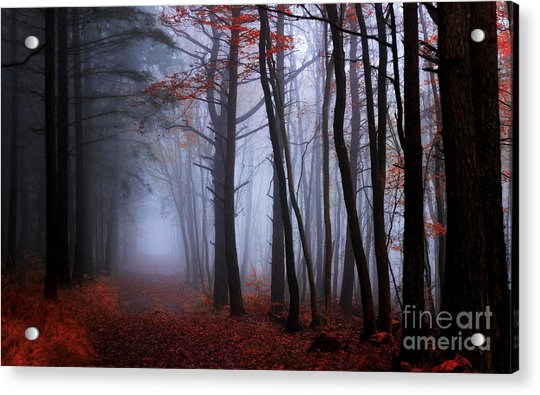 On The Footprints Of Merlin The Wizard Acrylic Print