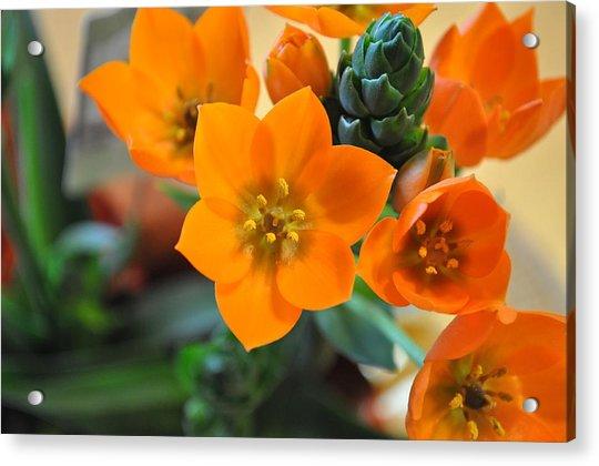 Orange Star Acrylic Print