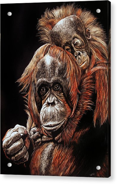 Orangutans Two Acrylic Print