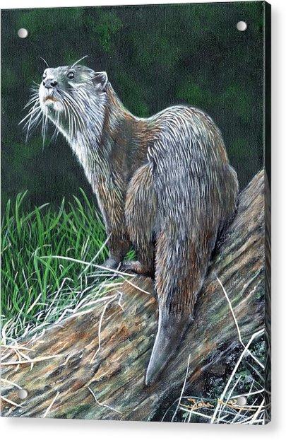 Otter On Branch Acrylic Print