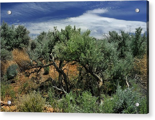 Out On The Mesa 3 Acrylic Print