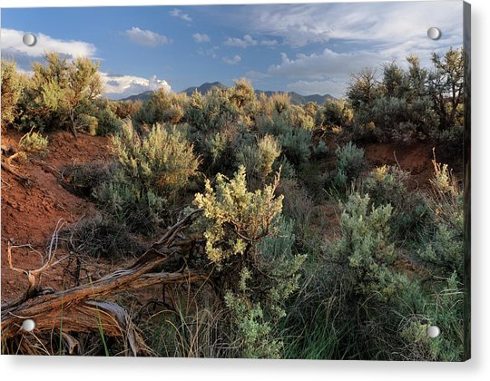 Out On The Mesa 7 Acrylic Print