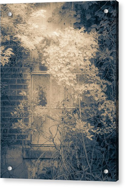 Overgrowth On Abandoned Pumping Station Acrylic Print