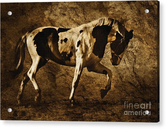 Paint Horse Acrylic Print